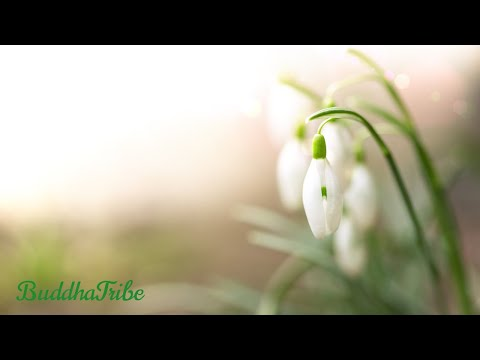 Morning Music for Yoga, Morning in the Forest, Relaxing Background Music for Yoga, Yoga Music