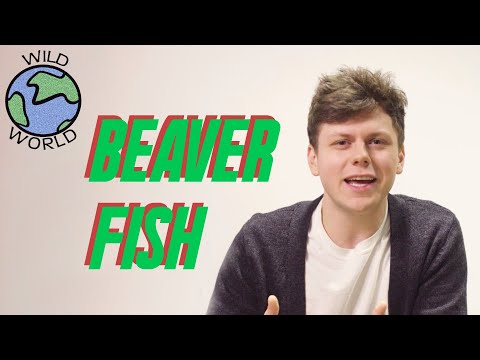 Chaz Cardigan - Beaver Fish - Wild World (Episode 19)