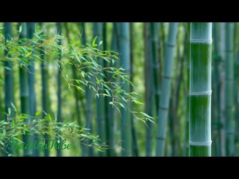 Música Zen 2020 | Yoga Relaxante de Meditação, Sons Suaves,Tratamento Espiritual ☆BT25