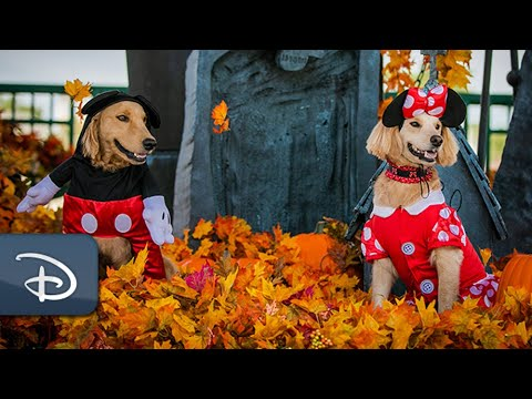 Dogs Offer Tail-Wagging Look at Newest Disney Halloween Fashions | #DisneyMagicMoments
