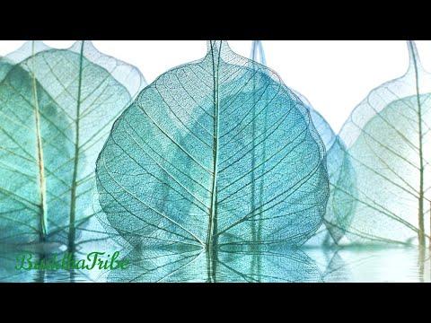 Musica do Japão, Koto, Jardim Zen, Melodias Tranquilas, Musica Budista, Ruido Natural, Zen e Paz