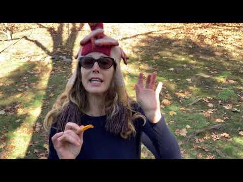 Giving Thanks 2020 | Sophie B. Hawkins