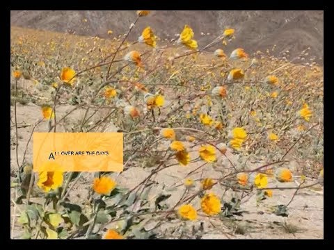 Dirty Projectors - Search For Life (Official Lyric Video)