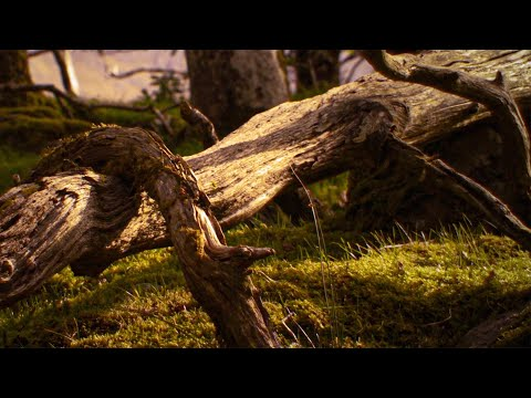 NIGHTWISH - Harvest (Official Lyric Video)
