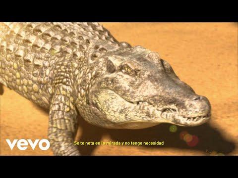 Rels B - LÁGRIMAS DE COCODRILO (Lyric Video)