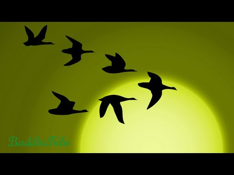 2021 Positive New Year Music: Calm Music, Ambient Songs, Be Calm and Focused, Positive Energy