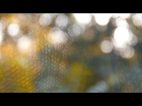 Boo Radley - D (Jungle Edit)