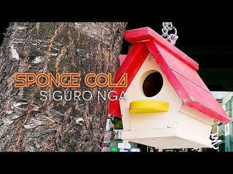 Sponge Cola -- Siguro Nga [OFFICIAL LYRIC VIDEO]