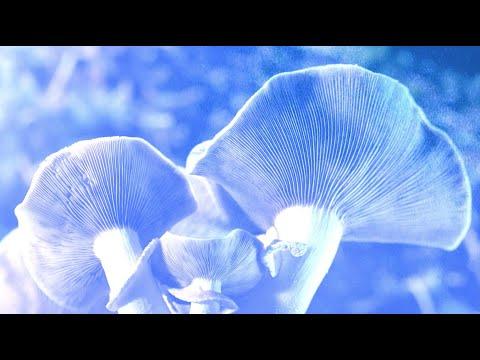 Cannabis, Mushrooms & Terpenes for Optimum Health - Roundtable Discussion