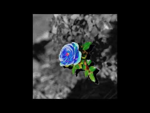 SoMo - Blue Rose