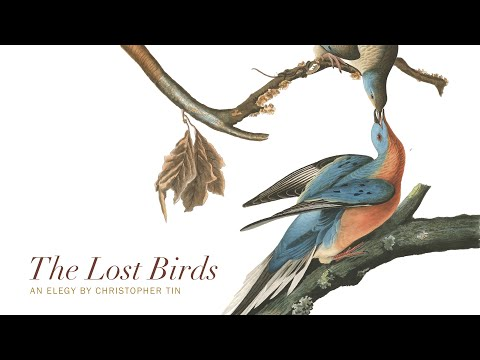 Kickstarter Trailer: 'The Lost Birds'