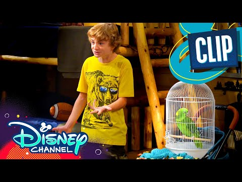 Look Who's Squawking Now | BUNK'D | Disney Channel