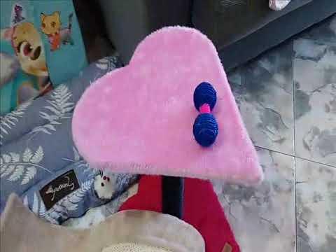 Nuestra preciosa gata siamesa Anna - ( canción Amor Platónico )