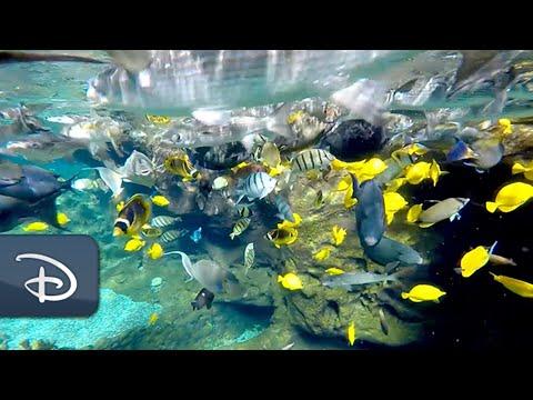 Behind the Scenes at Rainbow Reef | Aulani, a Disney Resort & Spa