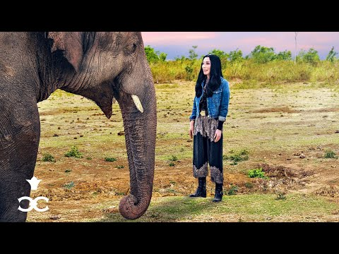 Cher & The Loneliest Elephant Official Trailer | April 22 on Paramount+