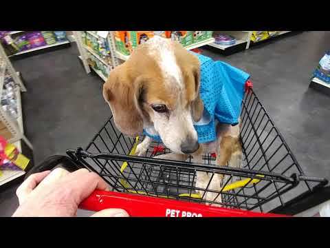 BAXTER THE BEAGLE- MEMORY ( Jan.13, 2005- Jan. 20, 2021- RIP)