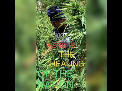 HERB is the healing of the nation!