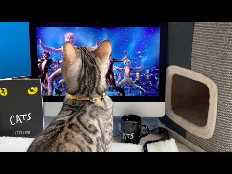 Cats Watching 'CATS'