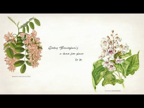 Suzy Bogguss - Sunday Birmingham Lyric Video