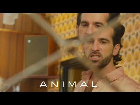 King Charles - Animal (Visualiser)
