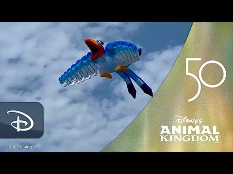 'Disney KiteTails' Coming To Disney's Animal Kingdom | Walt Disney World Resort