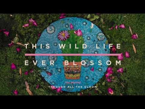 This Wild LIfe - Through All The Gloom (Official Audio)