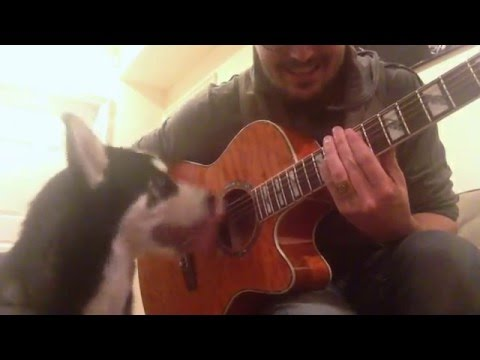 Are Huskies Good Dogs for Musicians?